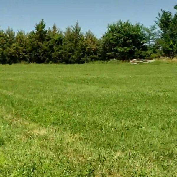 brome field