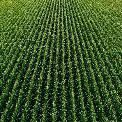 crop field square