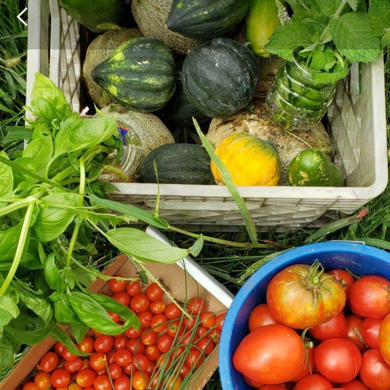 Garden Vegetable Harvest
